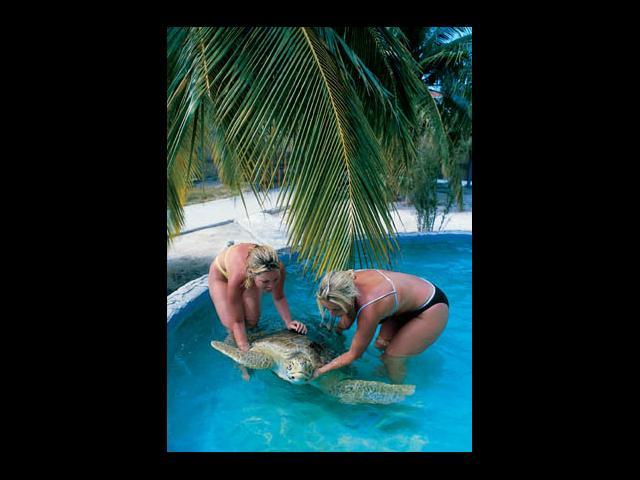 Cayo Largo - marine life in cayo largo