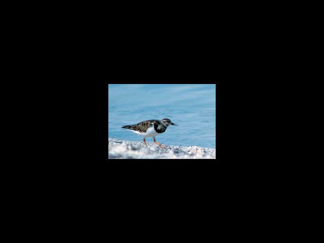 Cayo Largo - endemic birds in cayo largo